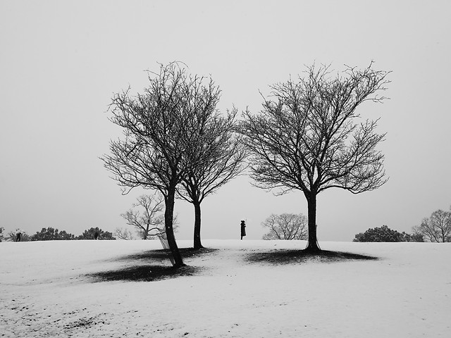 winter-snow-tree-fog-landscape picture material