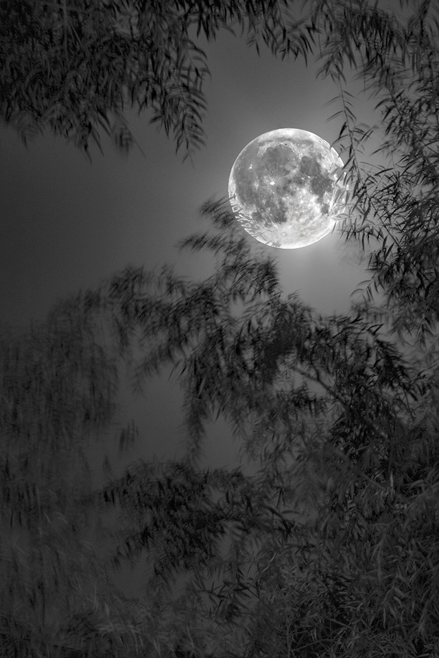 moon-christmas-winter-light-sky picture material
