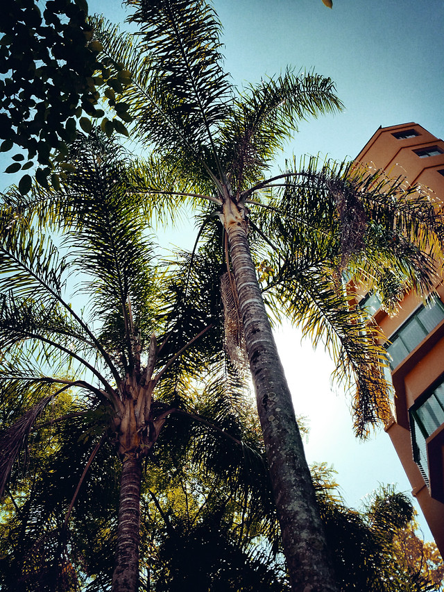 tropical-palm-tree-nature-exotic picture material