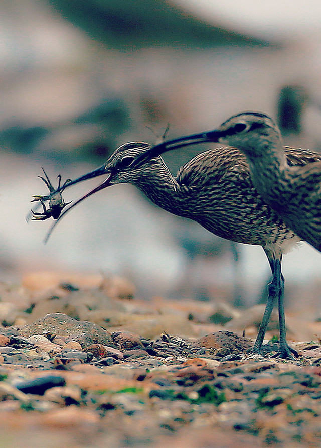bird-wildlife-nature-animal-outdoors picture material