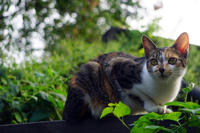 cat-cute-animal-nature-pet picture material