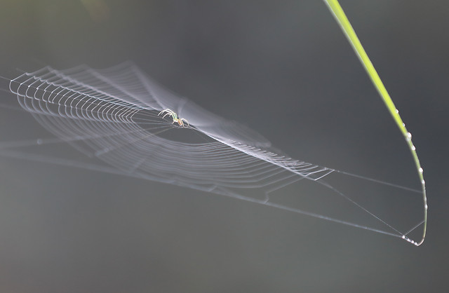 spider-insect-web-together-spiderweb-arachnid picture material