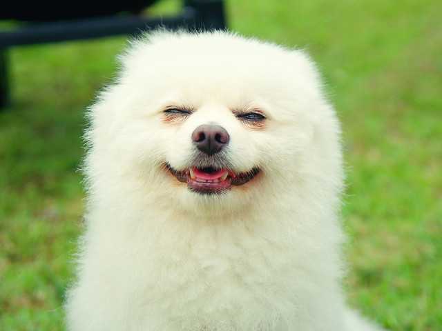 cute-dog-mammal-no-person-dog-like-mammal picture material