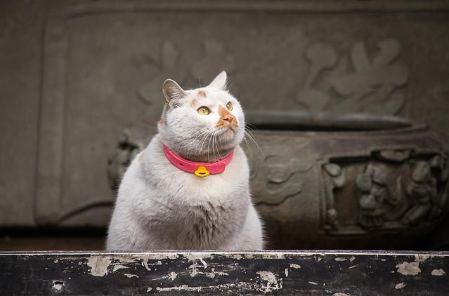 cat-animal-domestic-pet-mammal picture material