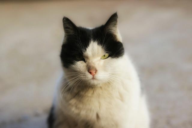 cat-cute-eye-animal-fur picture material