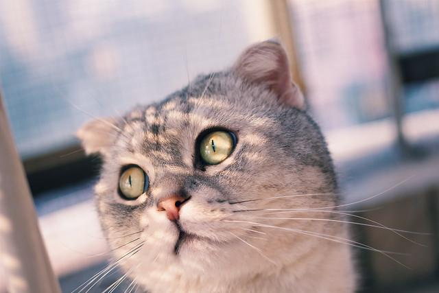 cat-portrait-animal-pet-eye 图片素材