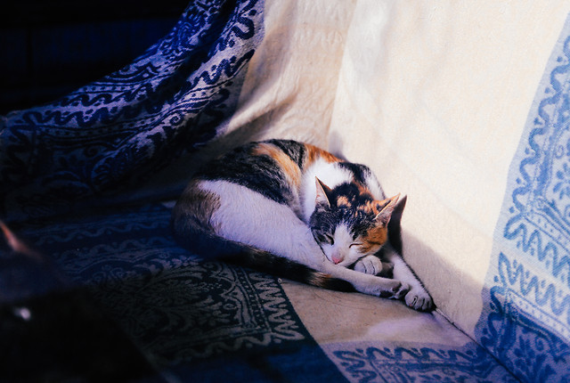 sleep-no-person-cat-bed-blue picture material