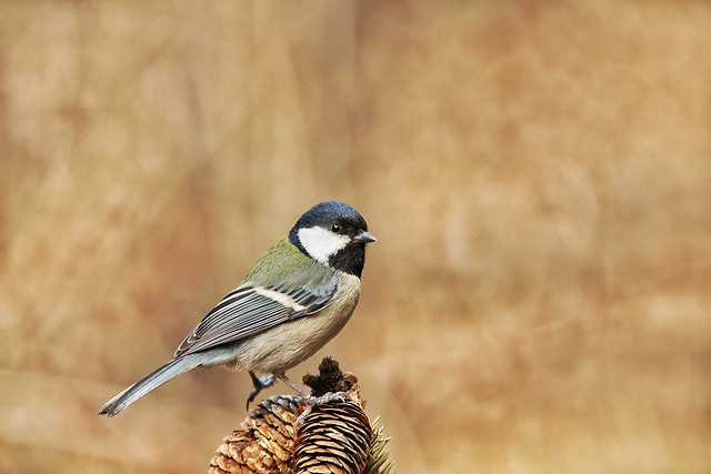 bird-wildlife-no-person-nature-outdoors picture material