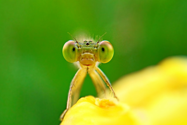 nature-no-person-insect-leaf-wildlife picture material