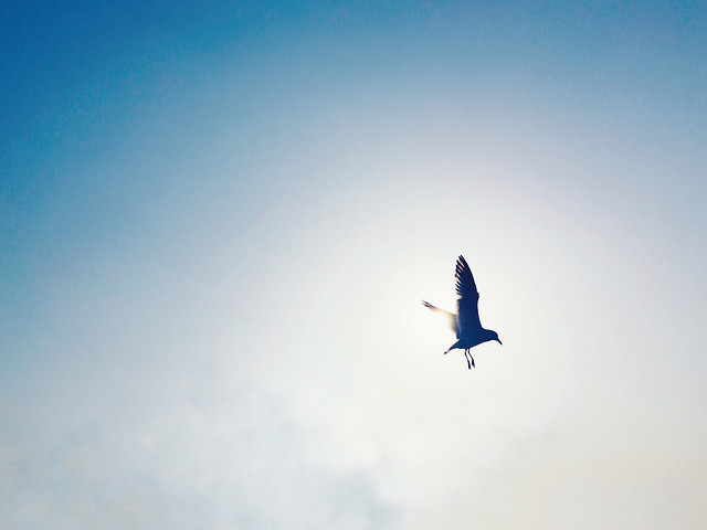 flight-sky-bird-freedom-outdoors picture material