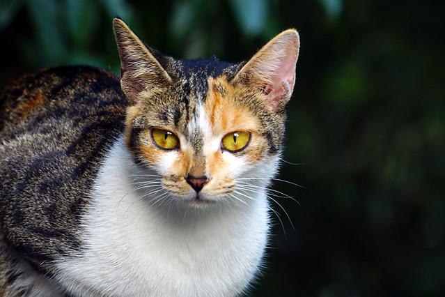 cat-cute-mammal-animal-pet 图片素材