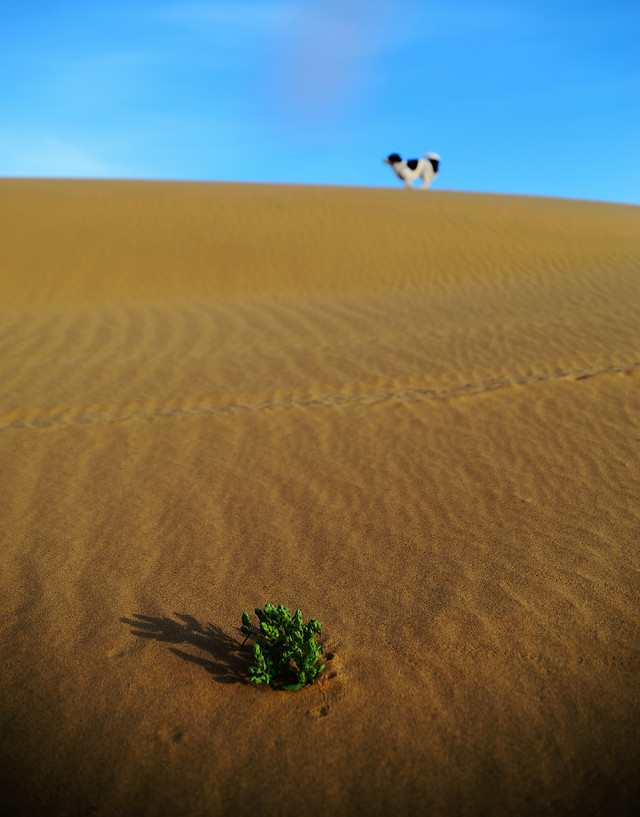 desert-dune-landscape-sand-no-person picture material