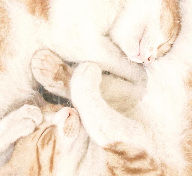 animal-cat-pet-fur-dog picture material