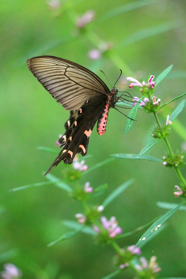 butterfly-nature-insect-no-person-summer picture material