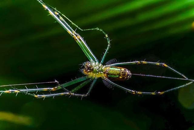 spider-insect-arachnid-invertebrate-wildlife picture material