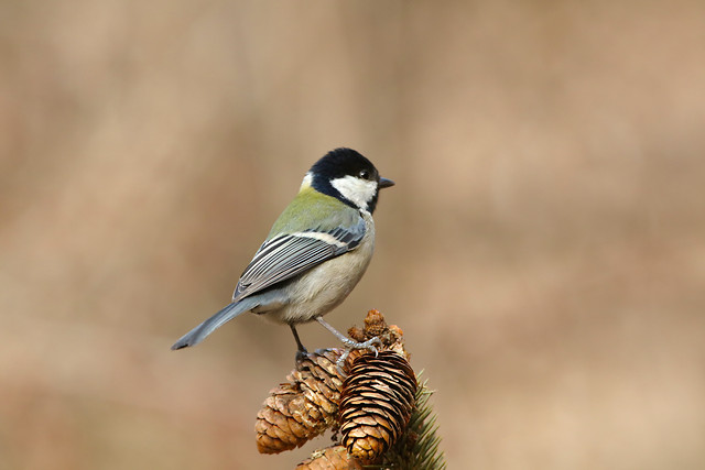 bird-wildlife-no-person-nature-animal picture material