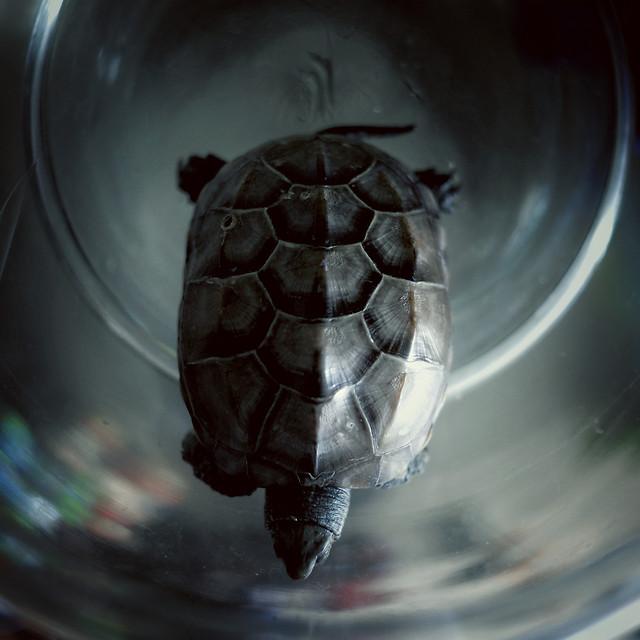 turtle-no-person-blur-nature-tortoise picture material