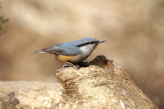 no-person-bird-wildlife-nature-outdoors picture material