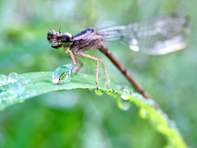 nature-no-person-insect-dragonfly-leaf picture material