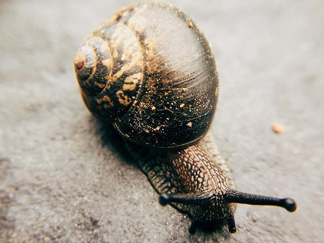 snail-no-person-slow-gastropod-invertebrate picture material