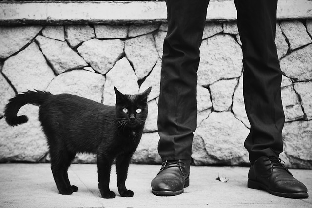 cat-people-black-street-black-white picture material