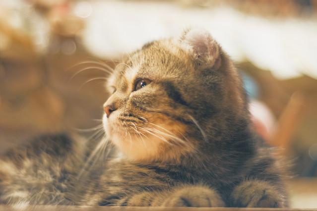 cat-mammal-animal-kitten-portrait picture material