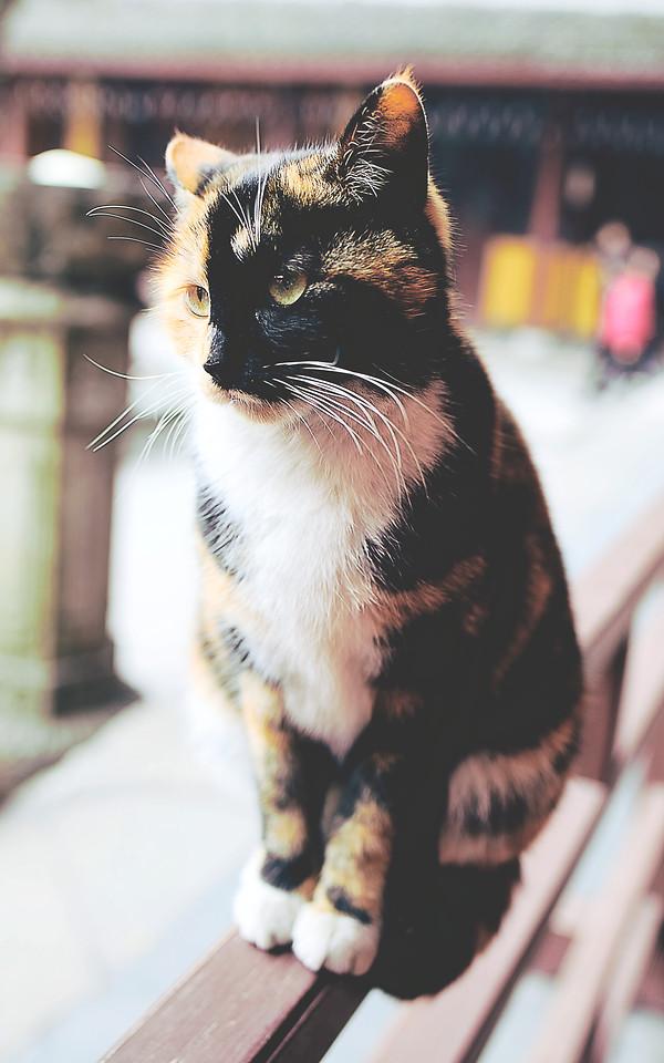 cat-portrait-mammal-pet-animal picture material