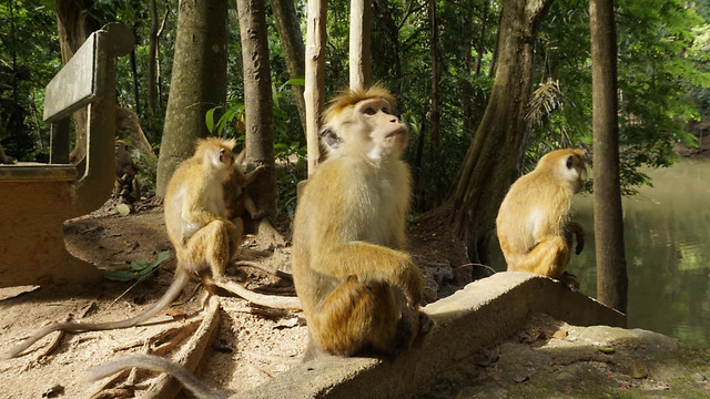wildlife-monkey-mammal-no-person-zoo picture material