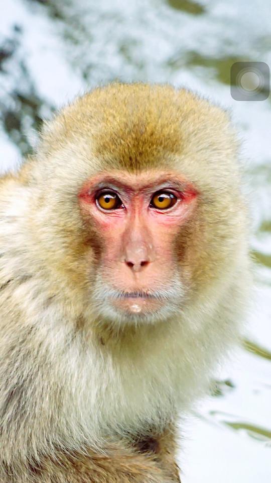 wildlife-nature-mammal-animal-portrait picture material
