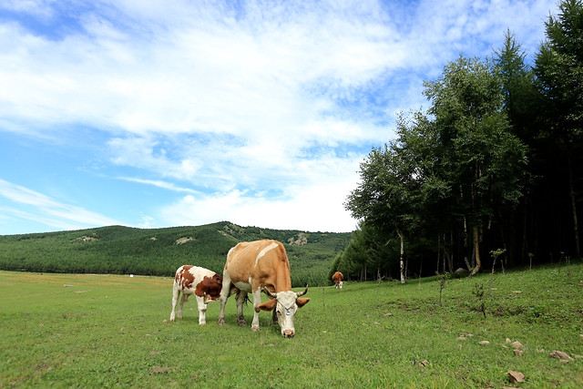 no-person-grass-pasture-agriculture-rural picture material