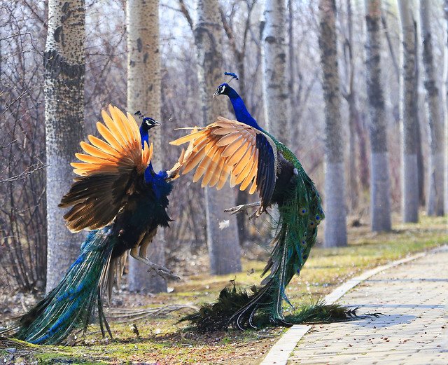 bird-nature-feather-color-animal picture material