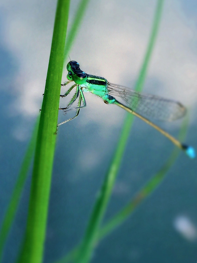 insect-nature-dragonfly-leaf-outdoors picture material