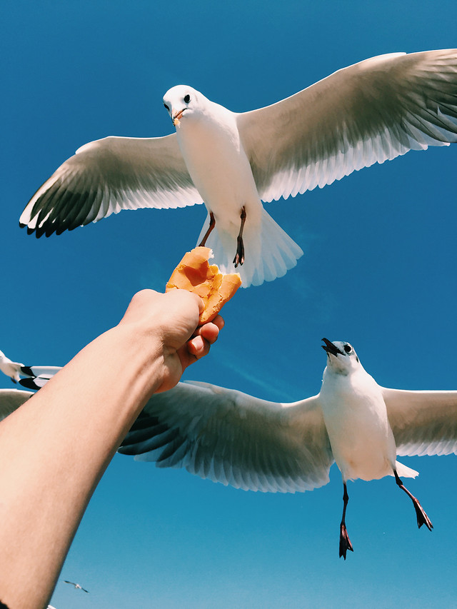 bird-seagulls-wildlife-no-person-nature picture material
