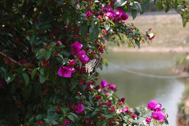 flower-garden-leaf-nature-rose 图片素材