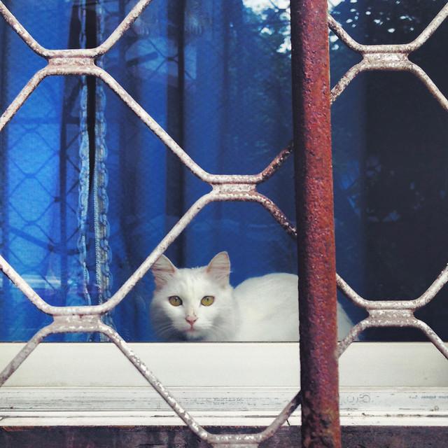cat-pet-animal-cute-kitten picture material