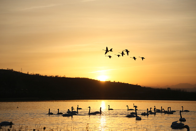 water-sunset-bird-lake-dawn picture material