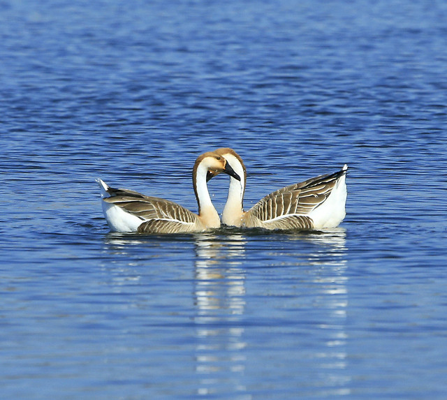 bird-water-nature-lake-no-person picture material