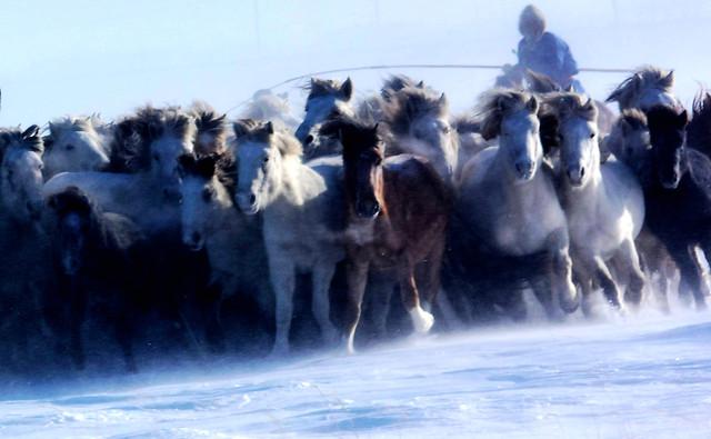 winter-mammal-snow-cold-cavalry picture material