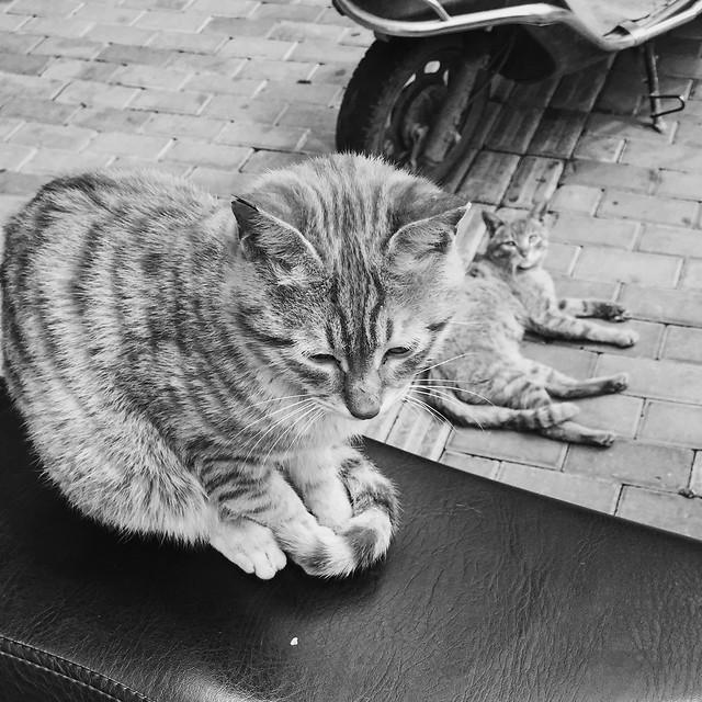 cat-pet-portrait-sleep-one picture material