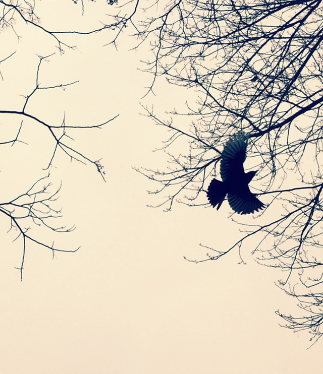 tree-branch-winter-bird-silhouette picture material