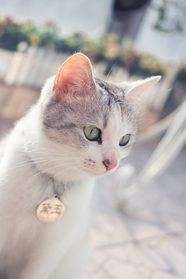 cat-cute-animal-eye-portrait picture material