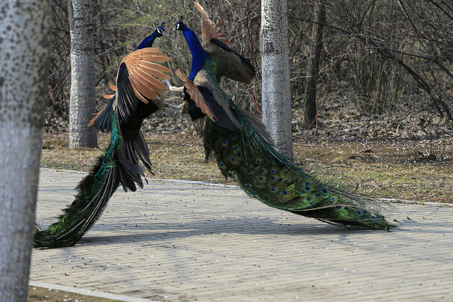 bird-feather-nature-color-zoo picture material