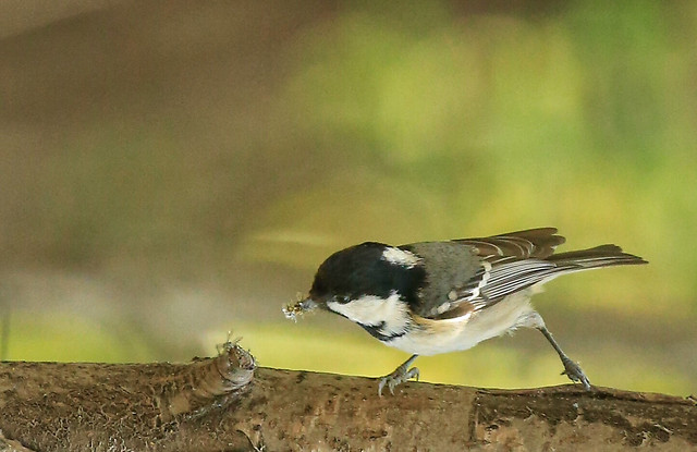 bird-wildlife-no-person-outdoors-nature picture material