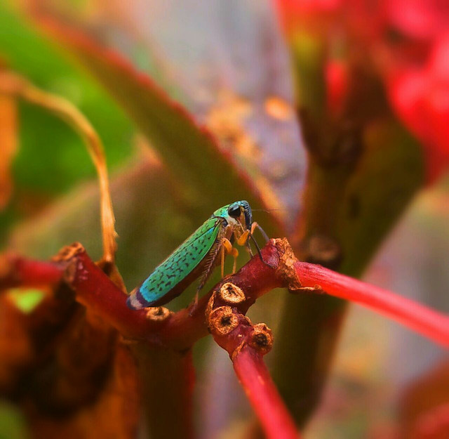 insect-invertebrate-animal-wildlife-color 图片素材