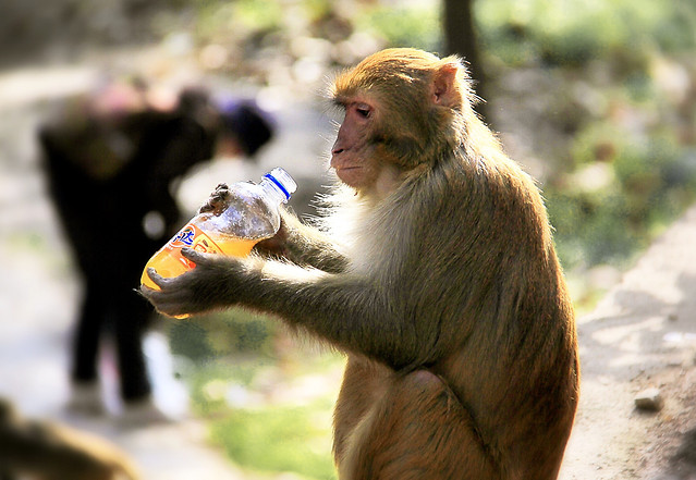 wildlife-nature-mammal-monkey-zoo picture material