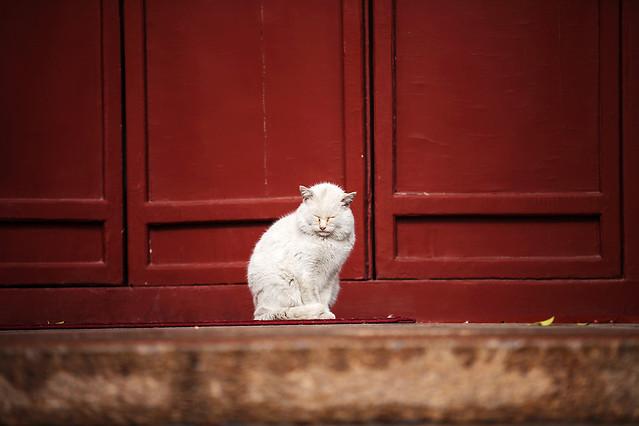 cat-door-red-portrait-mammal picture material