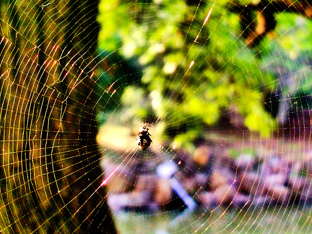 spider-spiderweb-web-together-trap-abstract picture material