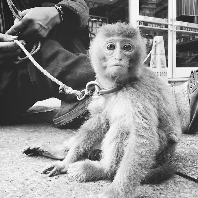 people-monkey-one-mammal-adult picture material