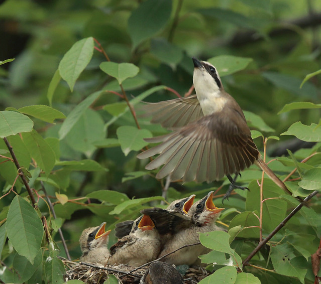 bird-wildlife-animal-nature-nest picture material