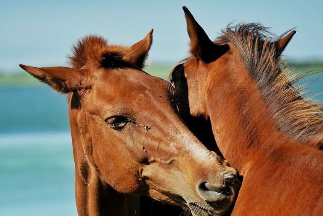 mammal-horse-animal-mane-wildlife picture material